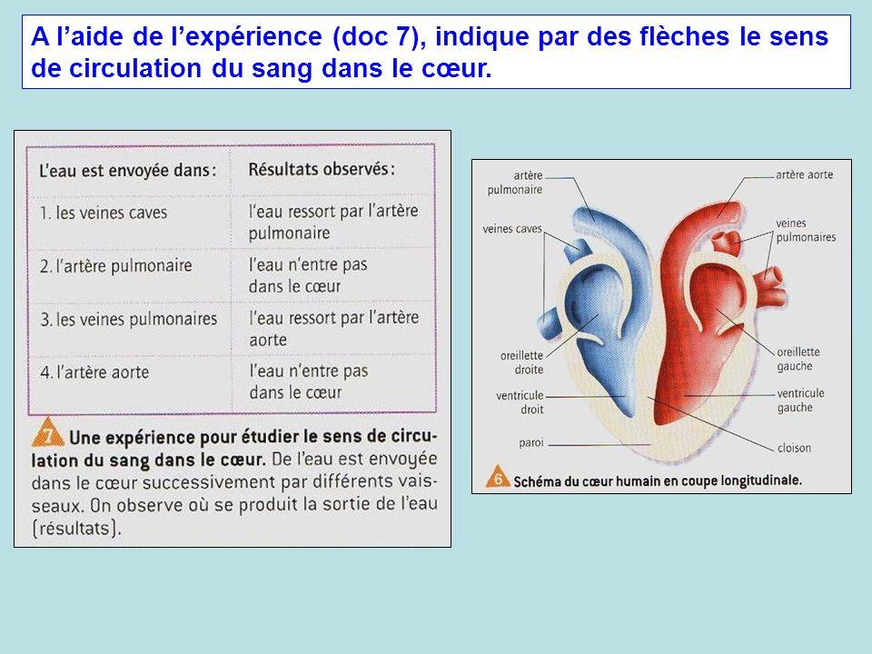 A l'aide de l'expérience (doc 7), indique par des flèches le sens de circulation du sang dans le cœur.