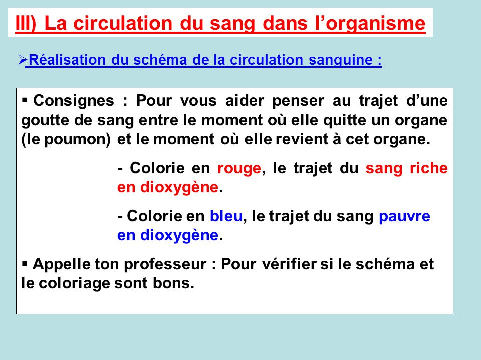 III) La circulation du sang dans l'organisme