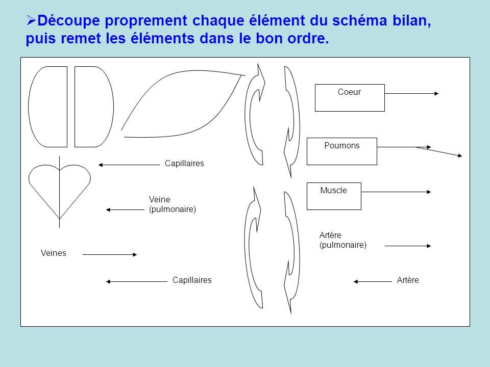 Découpe proprement chaque élément du schéma bilan, puis remet les éléments dans le bon ordre.