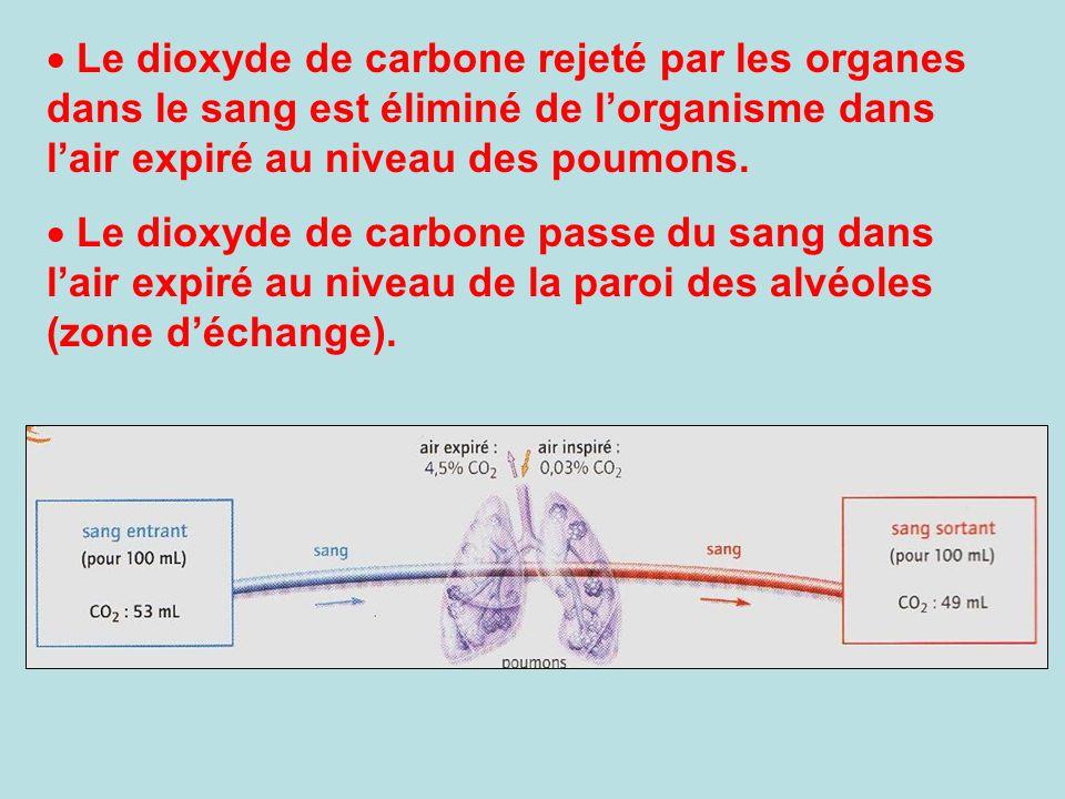 Le dioxyde de carbone rejeté par les organes dans le sang est éliminé de l'organisme dans l'air expiré au niveau des poumons.