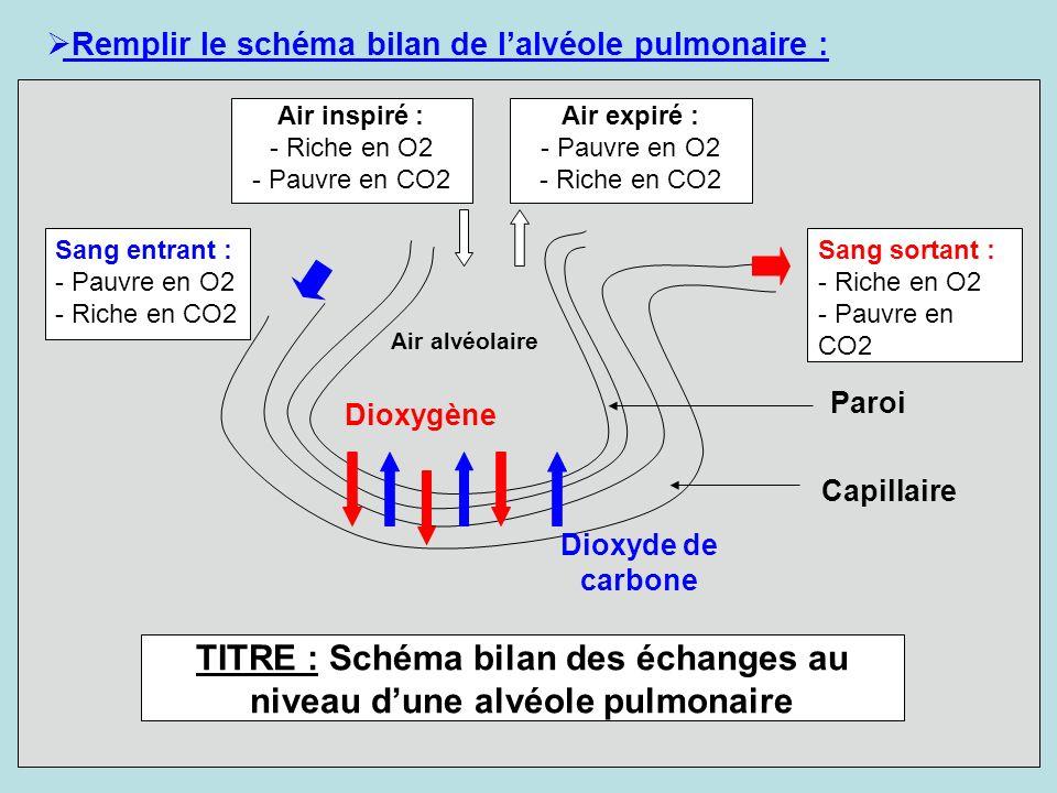 TITRE : Schéma bilan des échanges au niveau d'une alvéole pulmonaire
