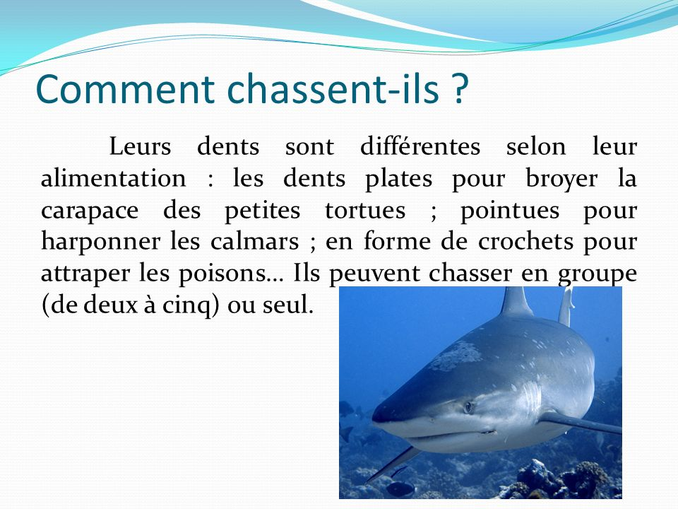 Comment chassent-ils