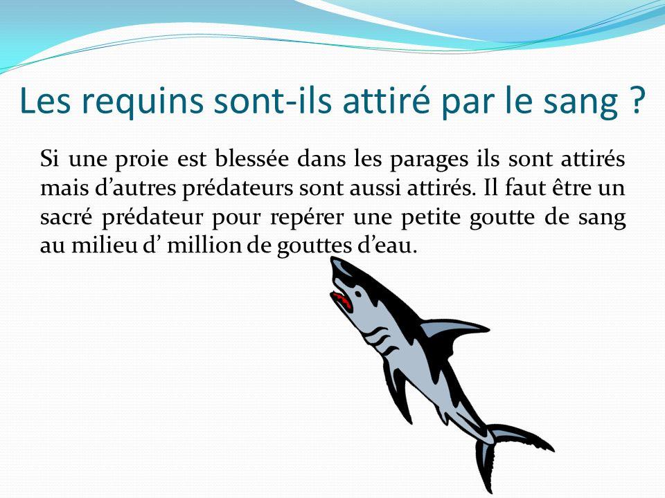 Les requins sont-ils attiré par le sang