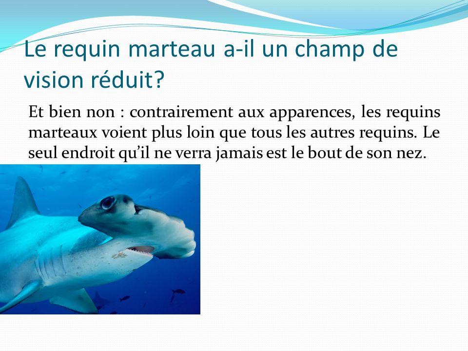 Le requin marteau a-il un champ de vision réduit