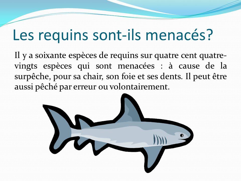 Les requins sont-ils menacés