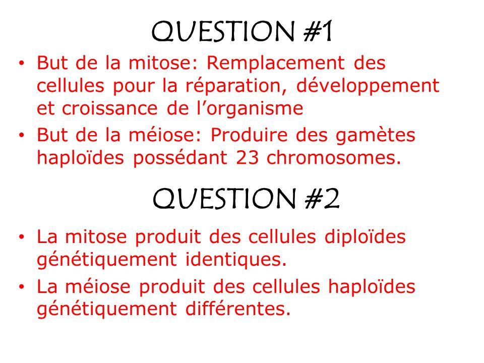 QUESTION #1 But de la mitose: Remplacement des cellules pour la réparation, développement et croissance de l'organisme.