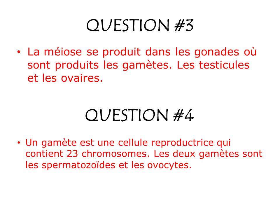 QUESTION #3 La méiose se produit dans les gonades où sont produits les gamètes. Les testicules et les ovaires.