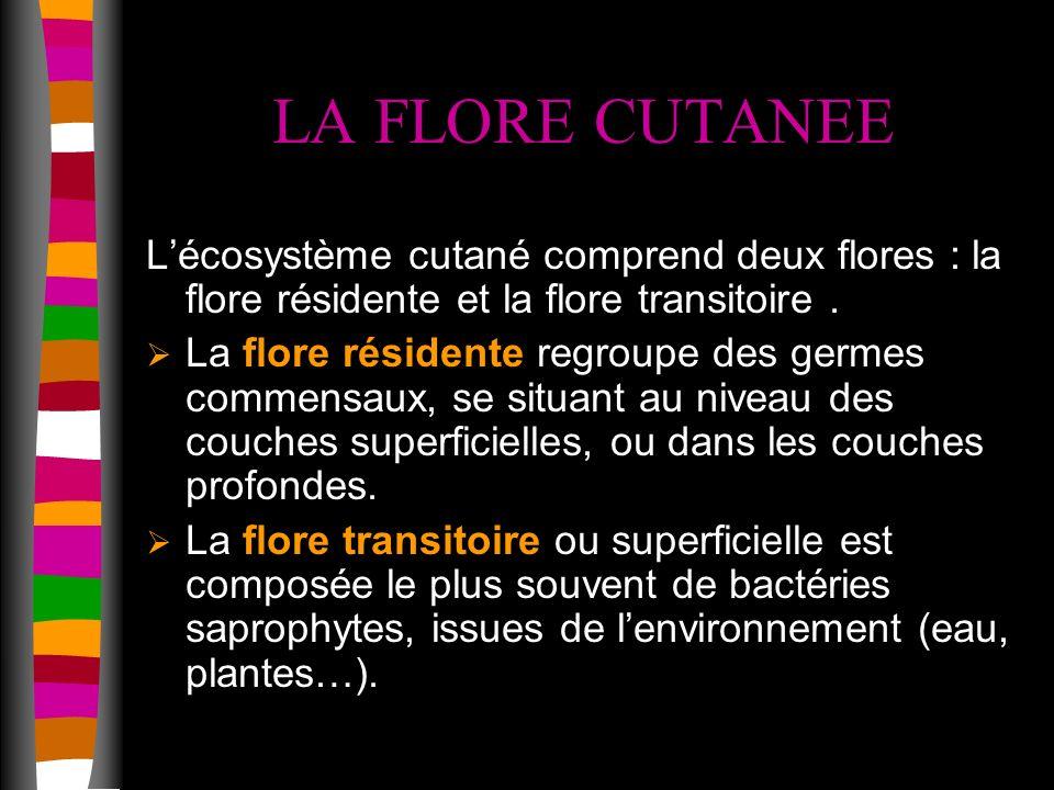 LA FLORE CUTANEE L'écosystème cutané comprend deux flores : la flore résidente et la flore transitoire .