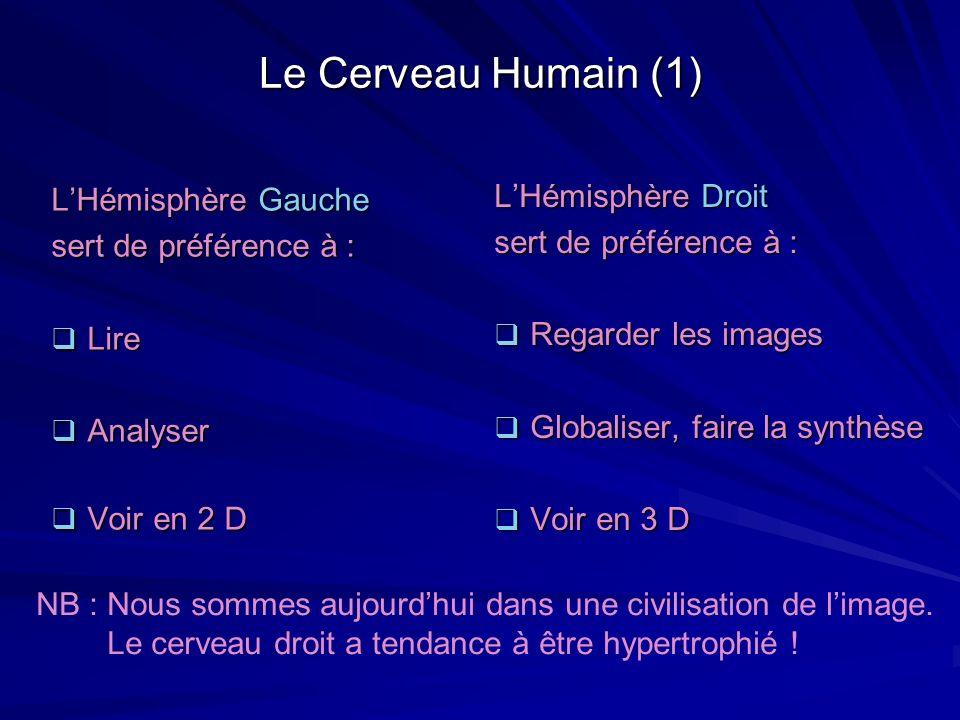Le Cerveau Humain (1) L'Hémisphère Droit L'Hémisphère Gauche