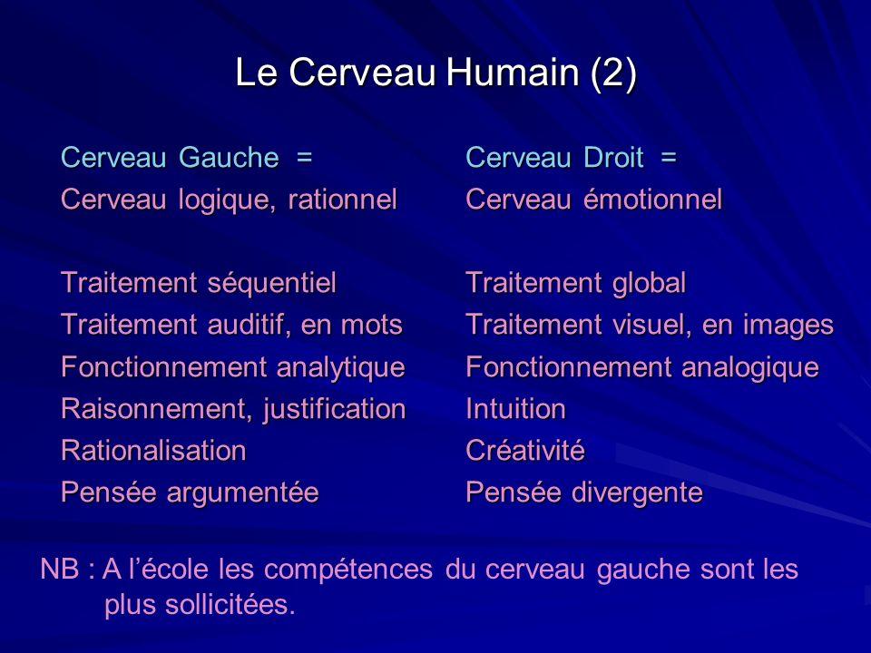 Le Cerveau Humain (2) Cerveau Gauche = Cerveau logique, rationnel