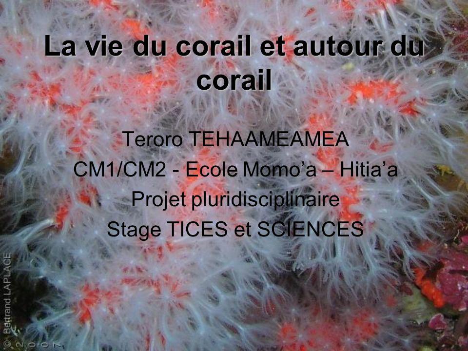 La vie du corail et autour du corail