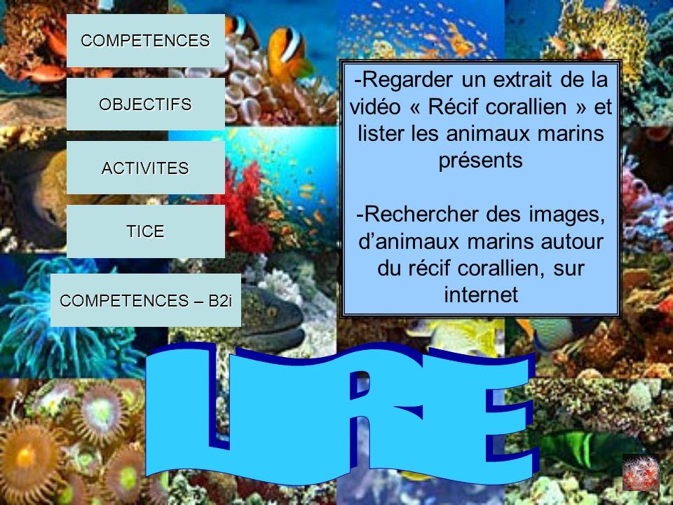 COMPETENCES -Regarder un extrait de la vidéo « Récif corallien » et lister les animaux marins présents.