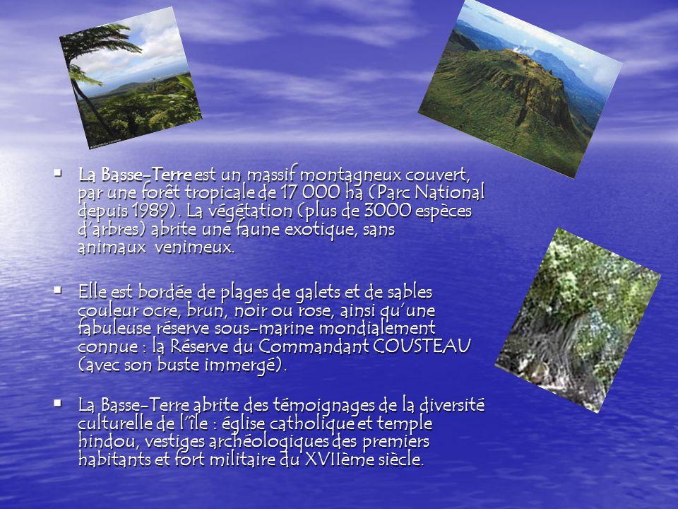 La Basse-Terre est un massif montagneux couvert, par une forêt tropicale de 17 000 ha (Parc National depuis 1989). La végétation (plus de 3000 espèces d'arbres) abrite une faune exotique, sans animaux venimeux.