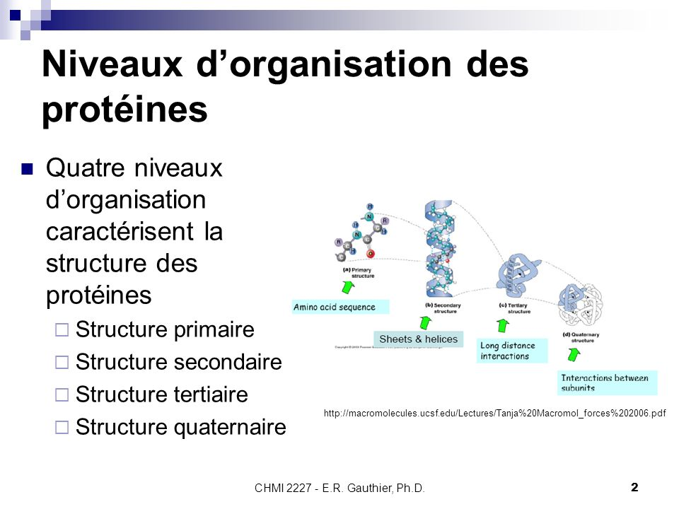 Niveaux d'organisation des protéines