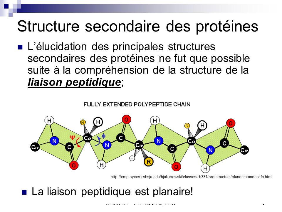 Structure secondaire des protéines