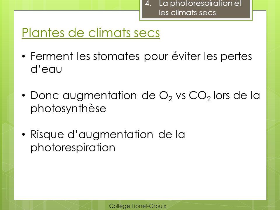 Plantes de climats secs
