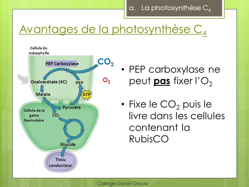 Avantages de la photosynthèse C4