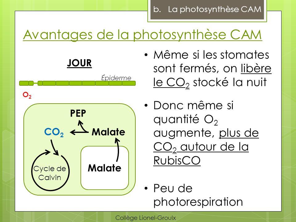 Avantages de la photosynthèse CAM