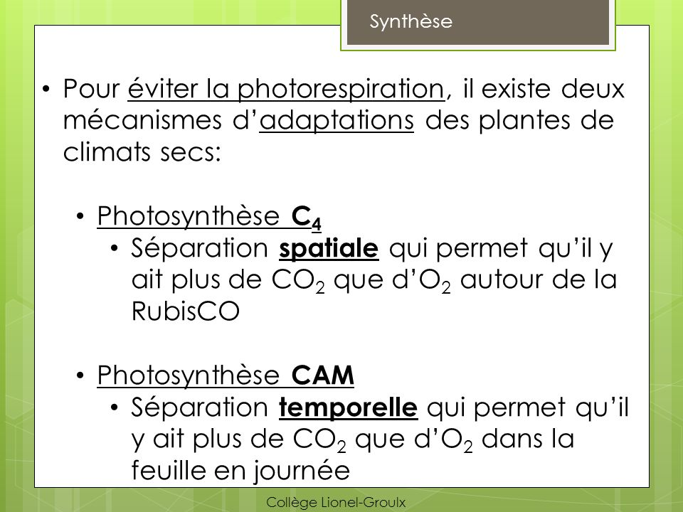 Synthèse Pour éviter la photorespiration, il existe deux mécanismes d'adaptations des plantes de climats secs:
