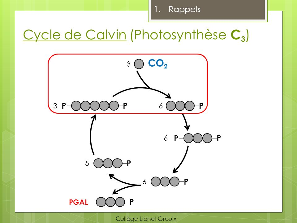 Cycle de Calvin (Photosynthèse C3)