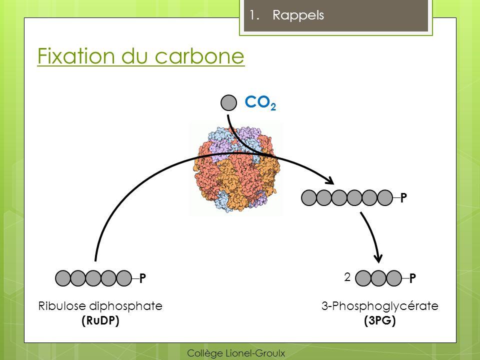 Fixation du carbone CO2 Rappels P 2 Ribulose diphosphate (RuDP)
