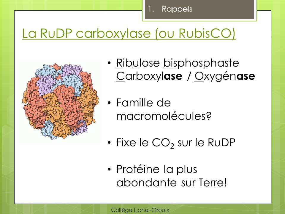 La RuDP carboxylase (ou RubisCO)