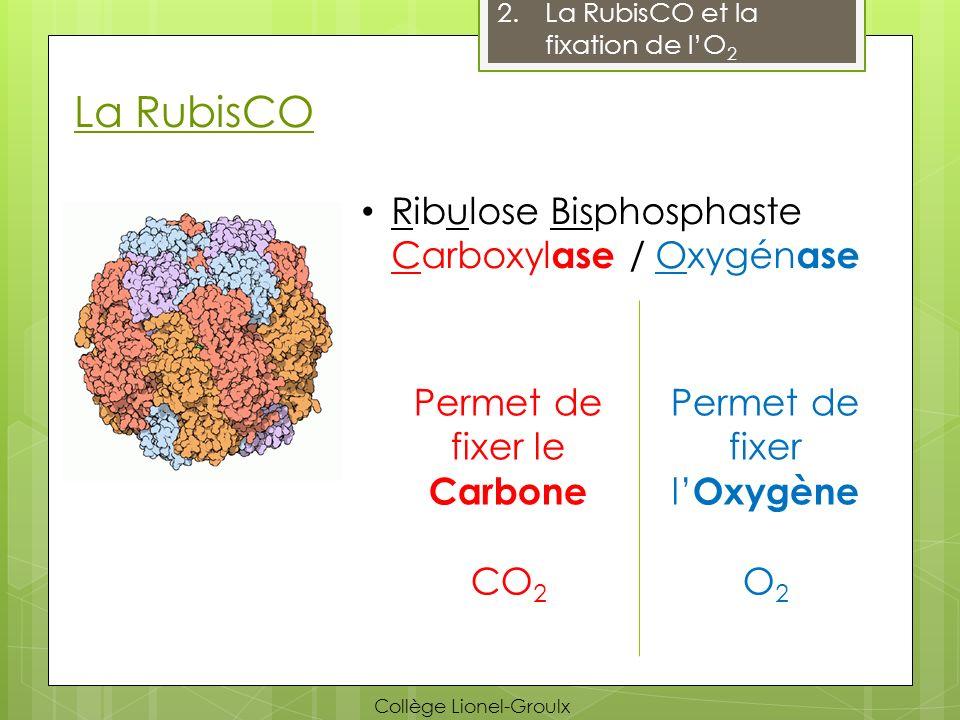 La RubisCO Ribulose Bisphosphaste Carboxylase / Oxygénase
