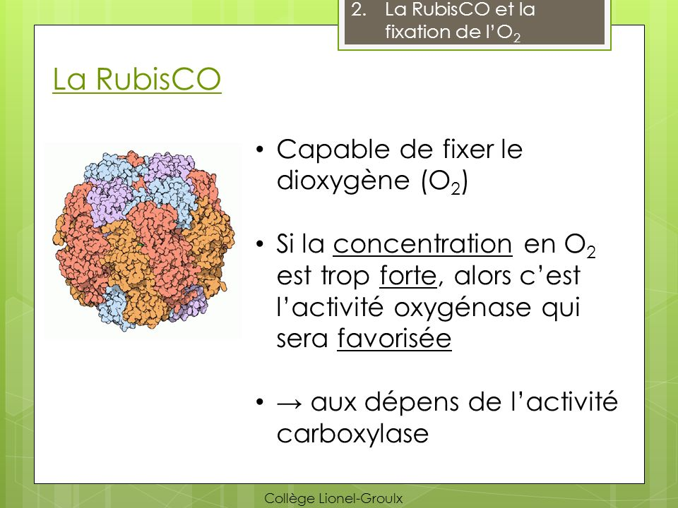 La RubisCO Capable de fixer le dioxygène (O2)