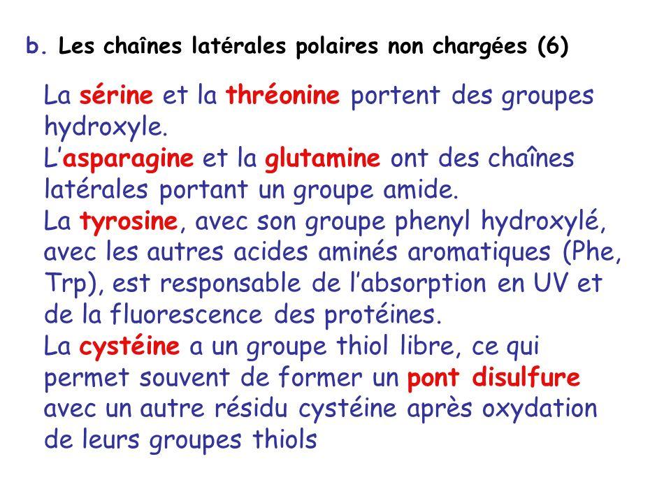 La sérine et la thréonine portent des groupes hydroxyle.