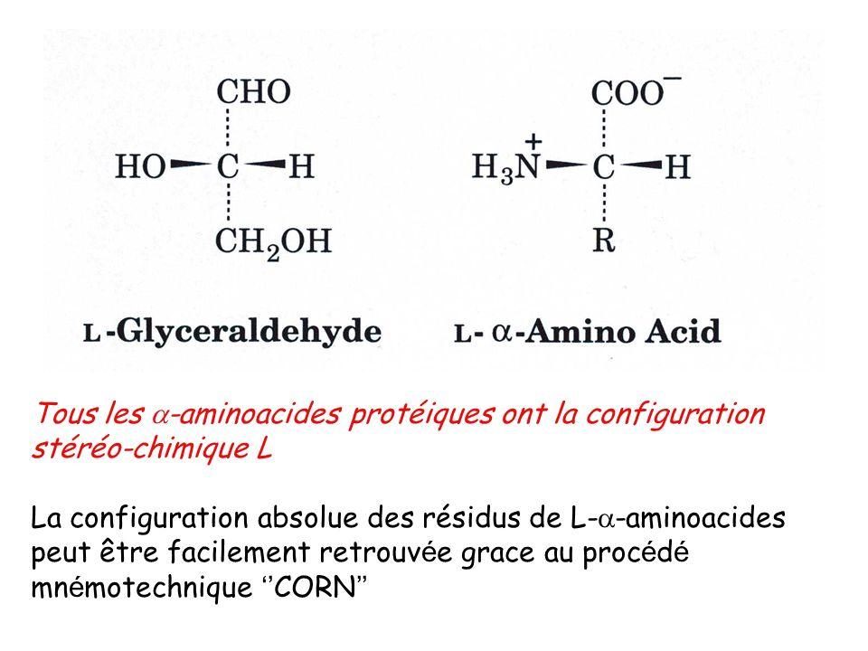 Tous les -aminoacides protéiques ont la configuration stéréo-chimique L