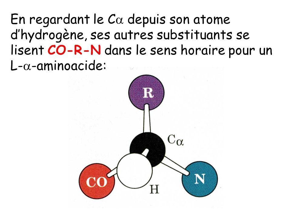 En regardant le C depuis son atome d'hydrogène, ses autres substituants se lisent CO-R-N dans le sens horaire pour un L--aminoacide: