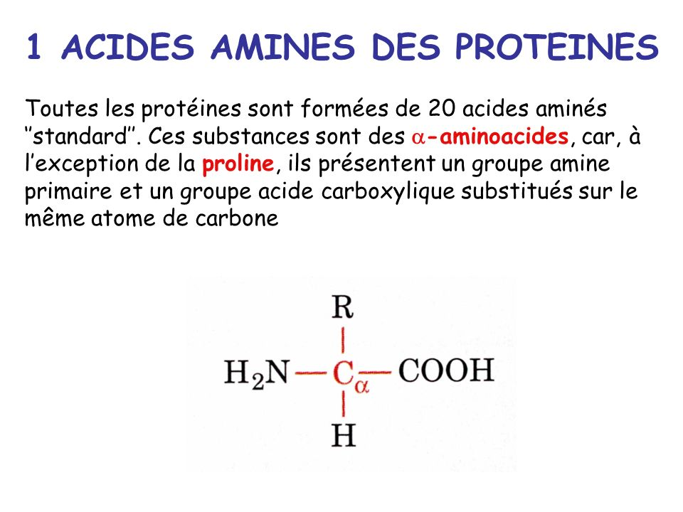 1 ACIDES AMINES DES PROTEINES