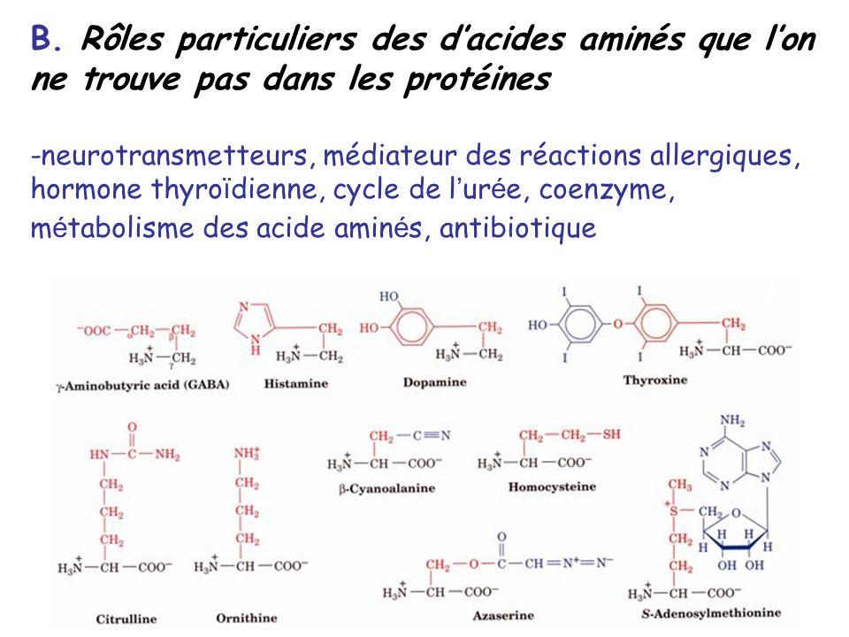 B. Rôles particuliers des d'acides aminés que l'on ne trouve pas dans les protéines