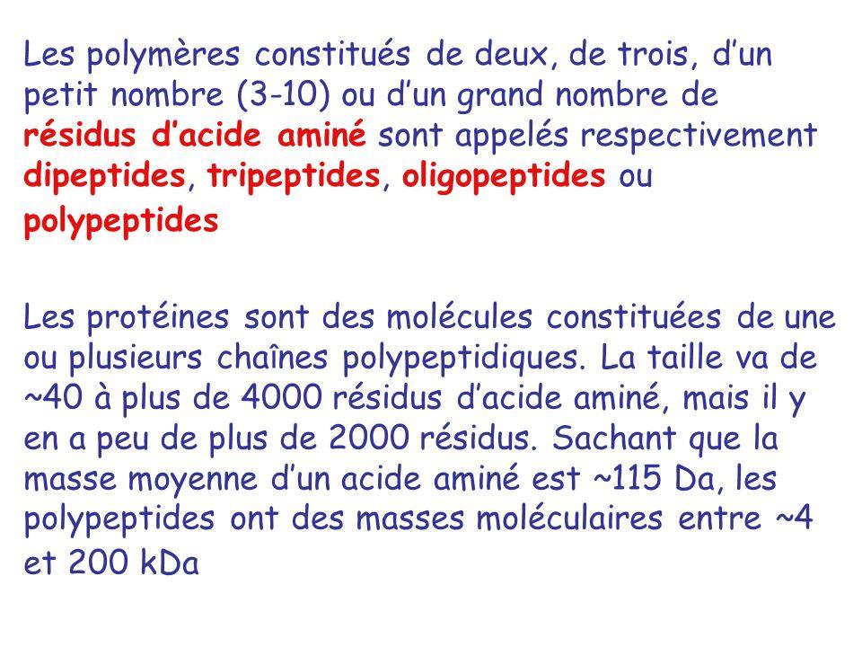 Les polymères constitués de deux, de trois, d'un petit nombre (3-10) ou d'un grand nombre de résidus d'acide aminé sont appelés respectivement dipeptides, tripeptides, oligopeptides ou polypeptides
