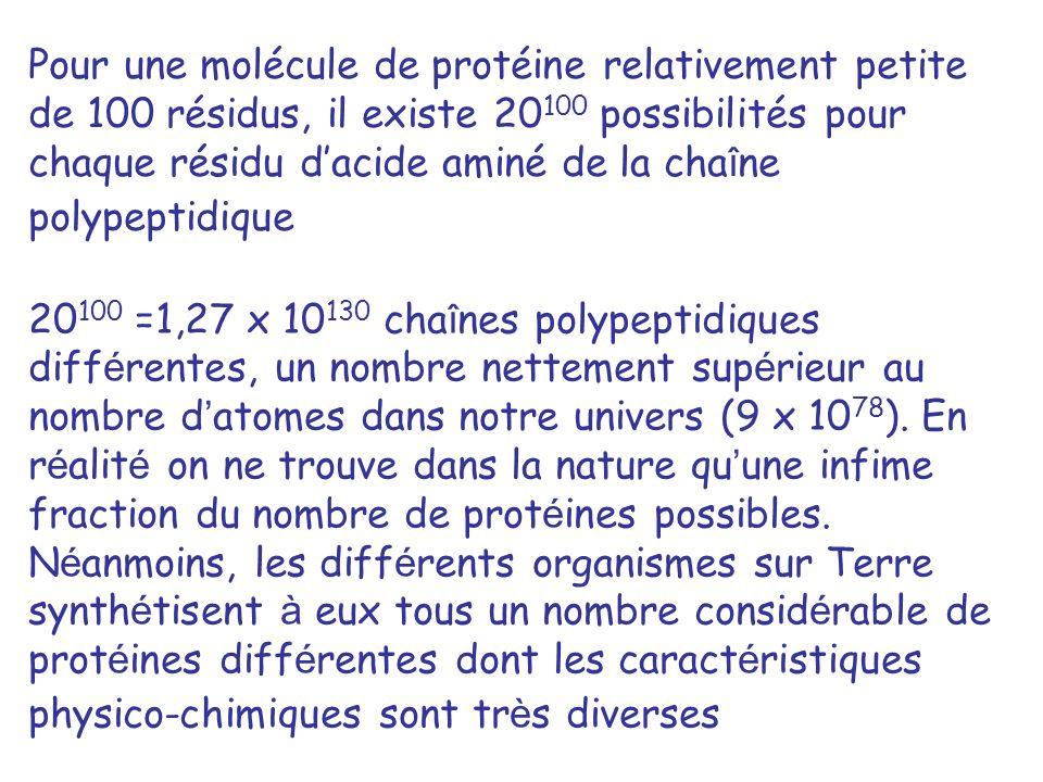 Pour une molécule de protéine relativement petite de 100 résidus, il existe 20100 possibilités pour chaque résidu d'acide aminé de la chaîne polypeptidique