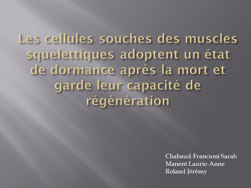 Les cellules souches des muscles squelettiques adoptent un état de dormance après la mort et garde leur capacité de régénération