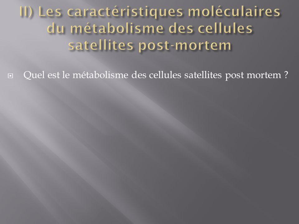 II) Les caractéristiques moléculaires du métabolisme des cellules satellites post-mortem