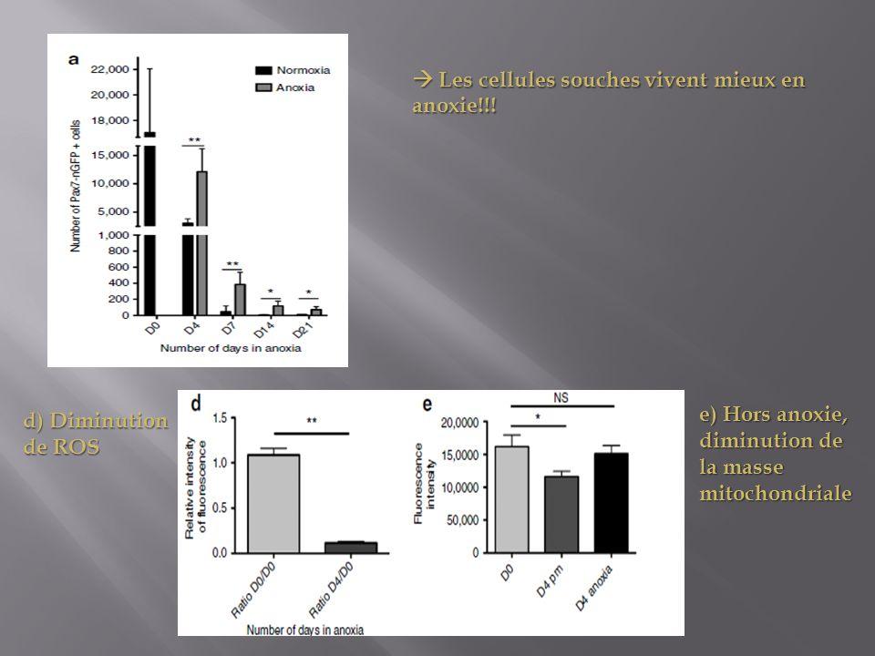  Les cellules souches vivent mieux en anoxie!!!