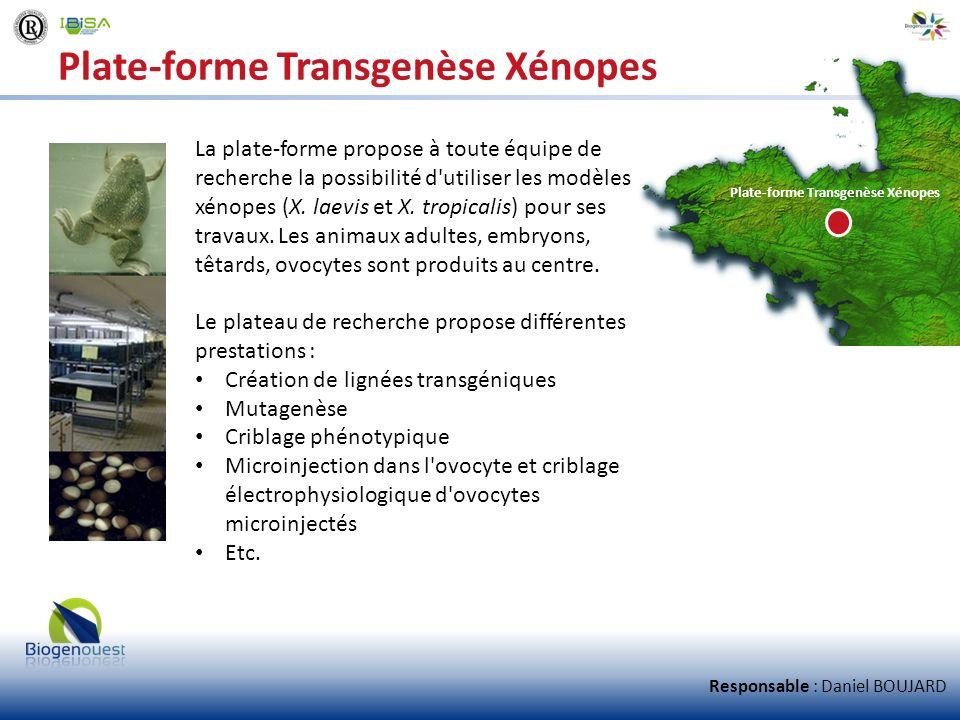 Plate-forme Transgenèse Xénopes