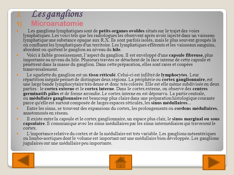Les ganglions Microanatomie
