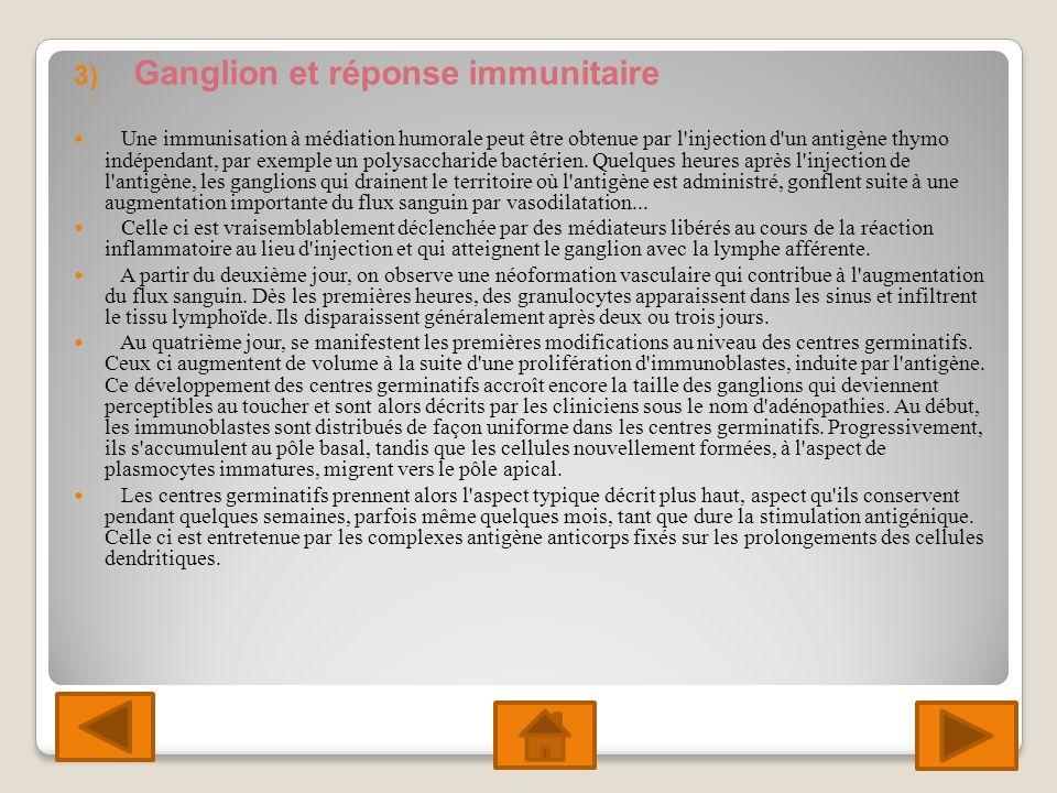 Ganglion et réponse immunitaire