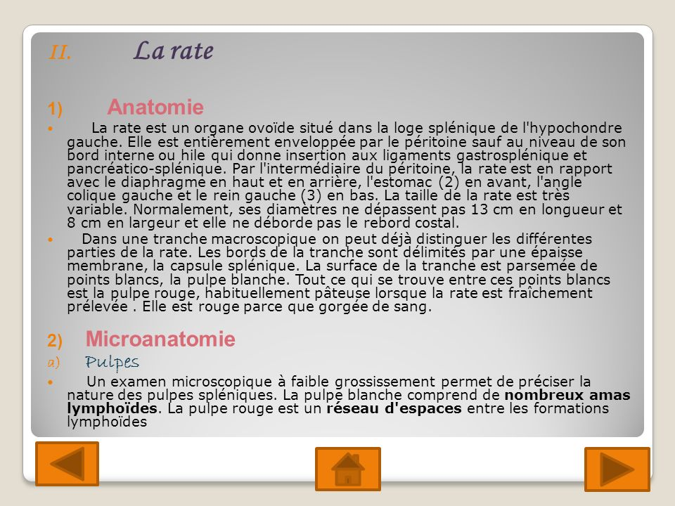 La rate Anatomie Microanatomie Pulpes