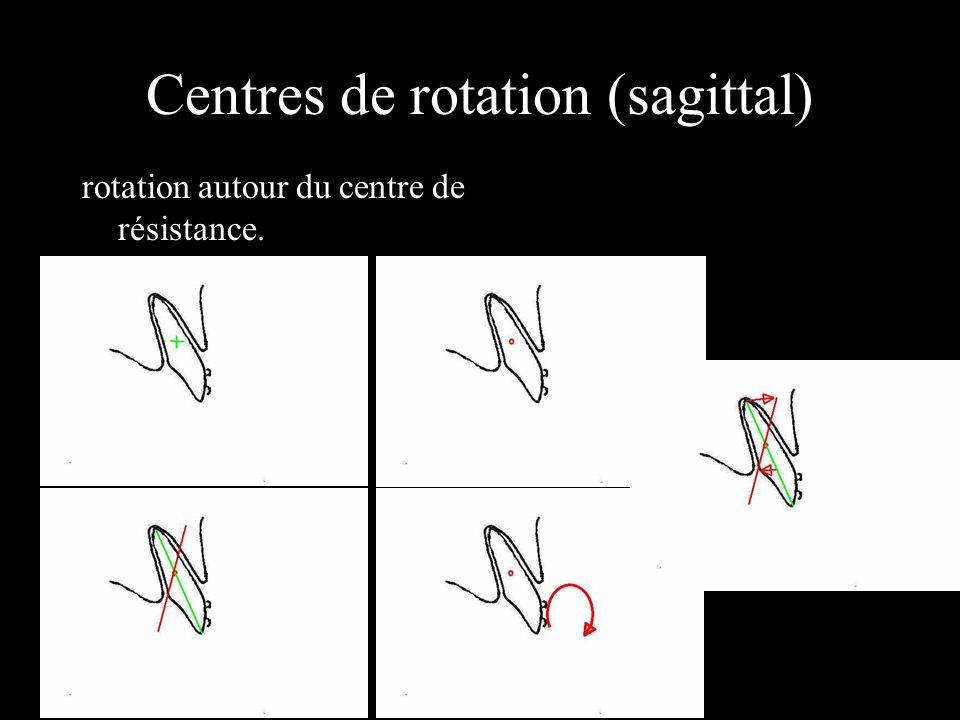 Centres de rotation (sagittal)