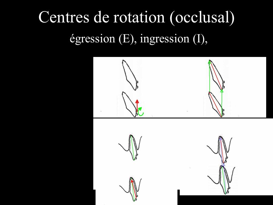 Centres de rotation (occlusal) égression (E), ingression (I),