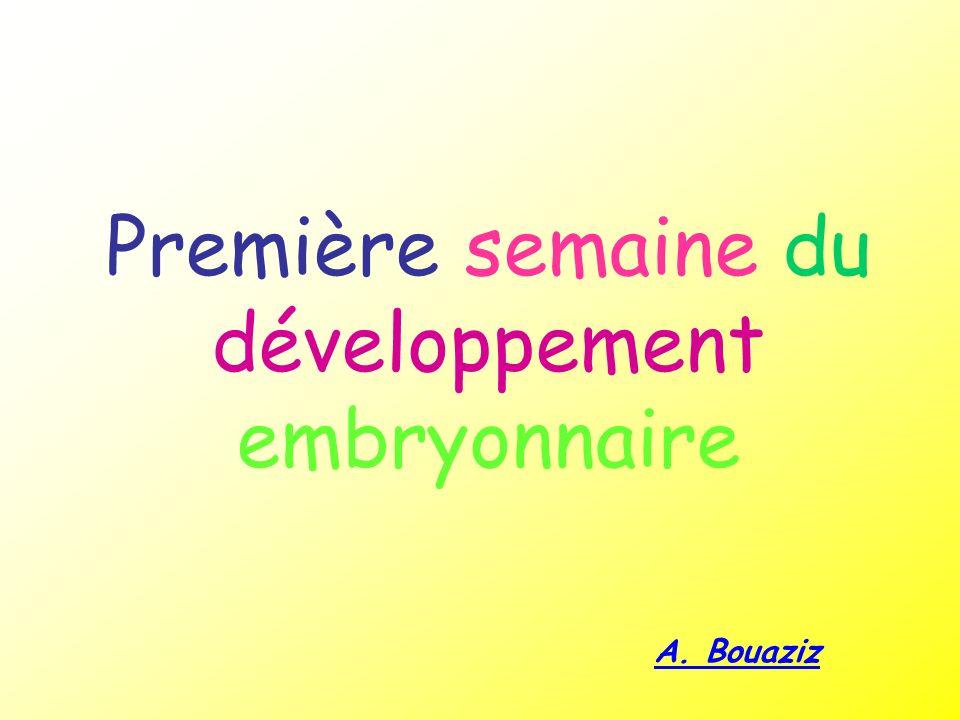 Première semaine du développement embryonnaire
