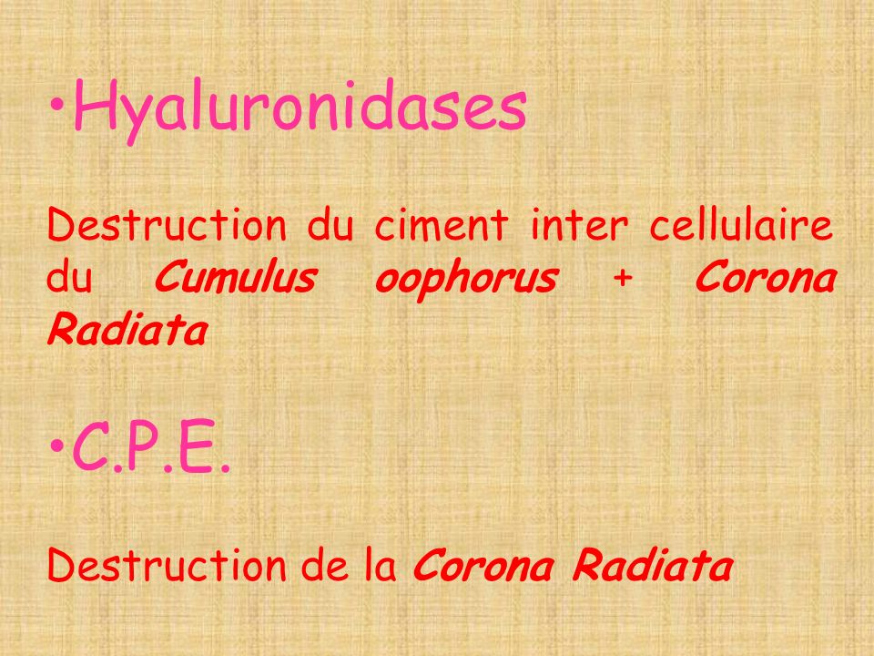 Hyaluronidases Destruction du ciment inter cellulaire du Cumulus oophorus + Corona Radiata. C.P.E.