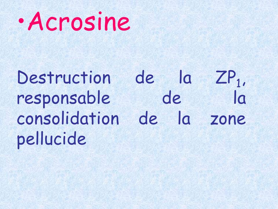 Acrosine Destruction de la ZP1, responsable de la consolidation de la zone pellucide