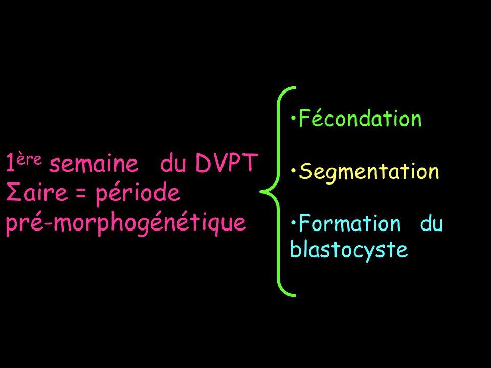 1ère semaine du DVPT Σaire = période pré-morphogénétique Fécondation