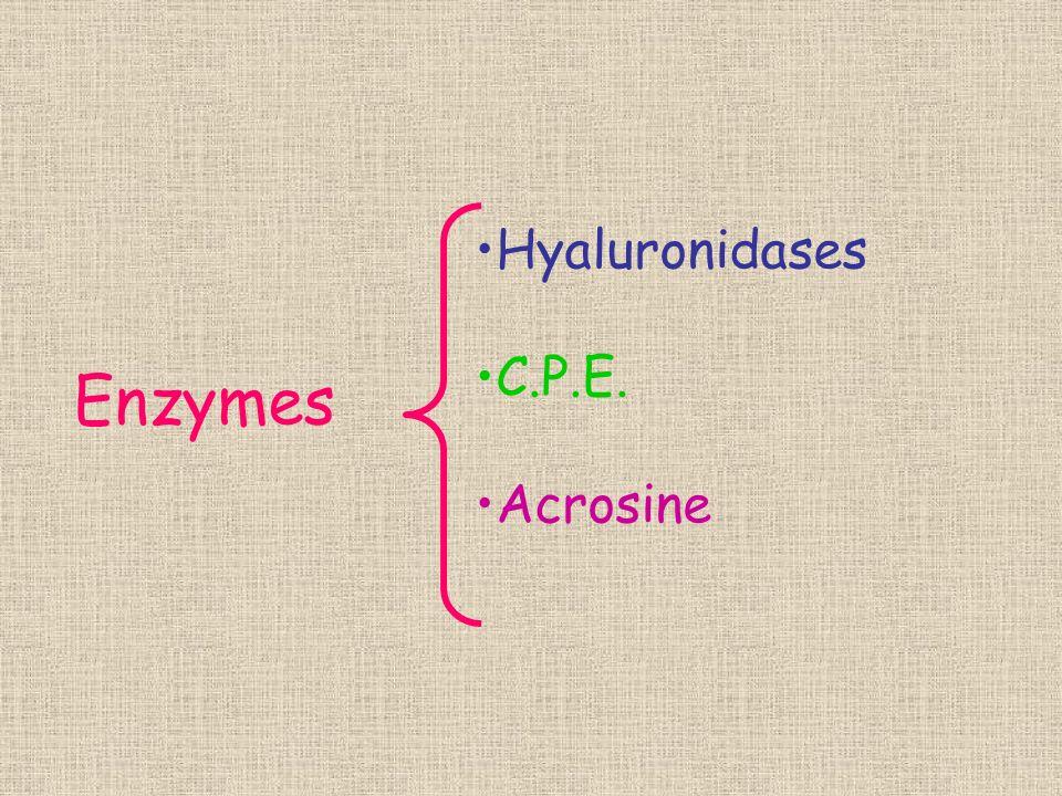 Hyaluronidases C.P.E. Acrosine Enzymes