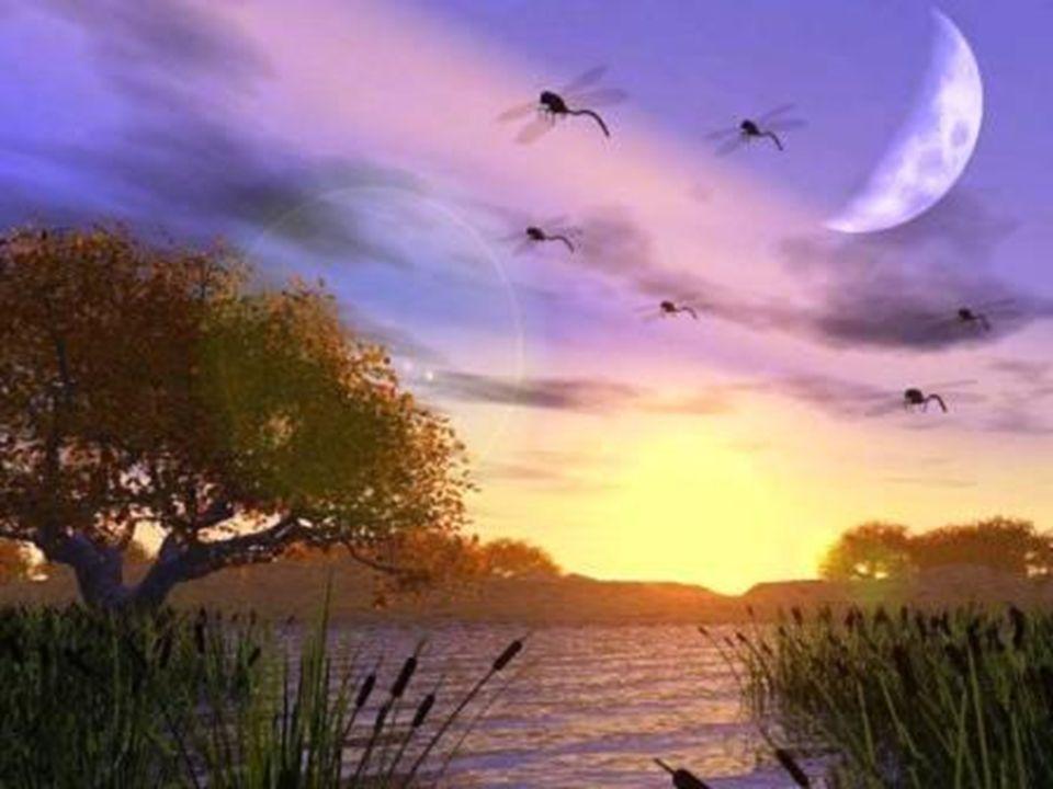 LES 4 ÉLÉMENTS PRIMORDIAUX L INFINI EN MOUVEMENT 6ème siècle av JC ANAXIMANDRE Pour Anaximandre, la terre, l eau, l air et le feu génèrent les différents éléments formant le monde sensible.